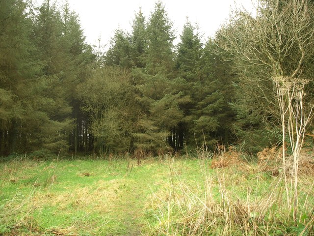 Plantation on Scobchester Down