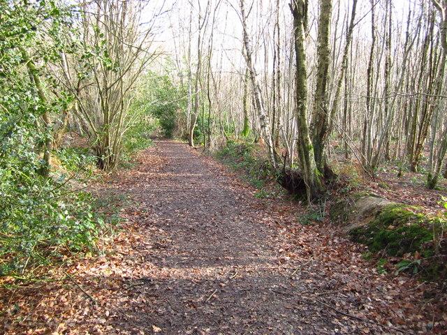 Track through Birchden Wood