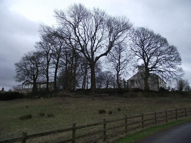 Trees at White Coppice Farm