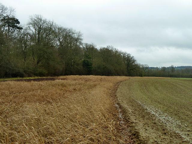 Game cover near Gason Wood