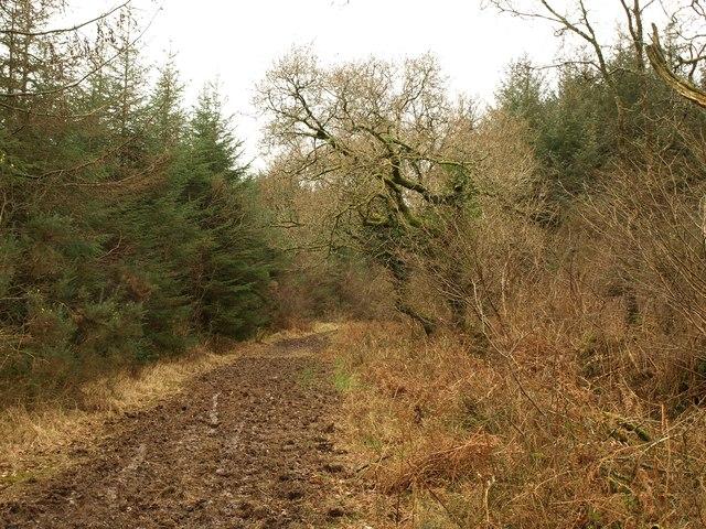 Bridleway, Wadland Down Plantations