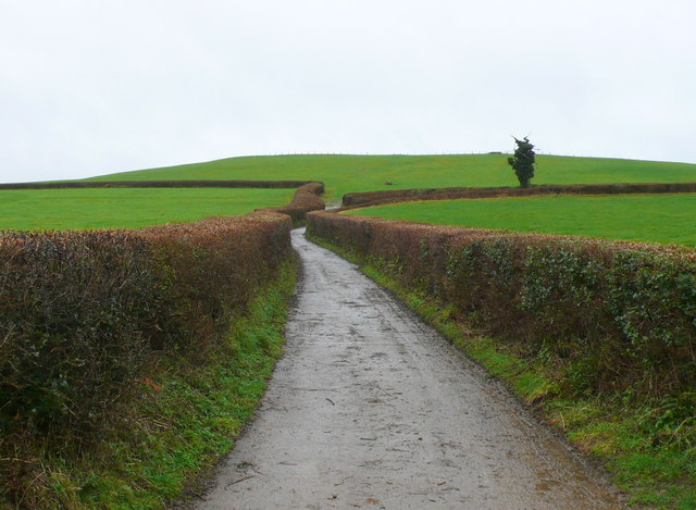 The Track to Loscombe