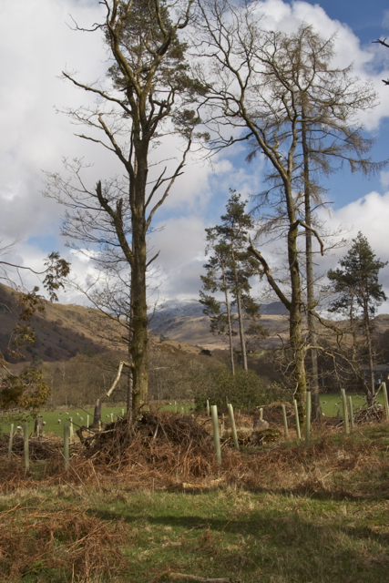 Scafell from Low Firth Wood Eskdale