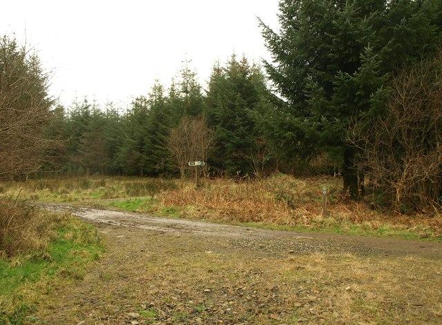 Bridleway crossroads, Wadland Down Plantations