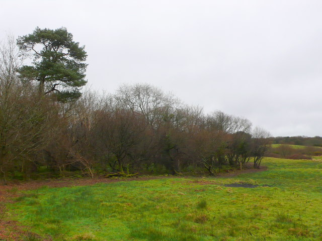 Boggy Pastures at North Poorton