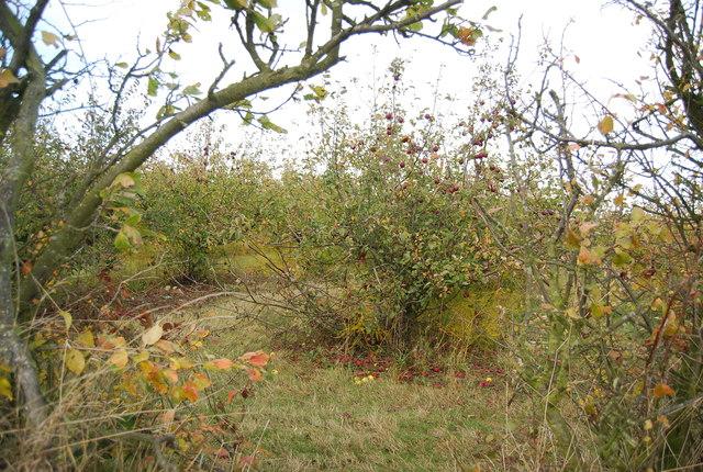 Orchard, New Barn Farm