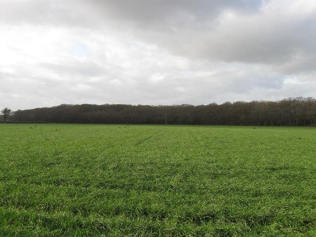 Hoads Field