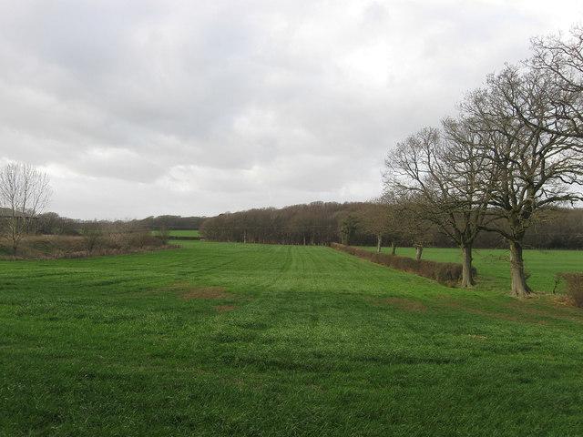 Gate Field