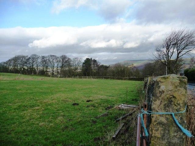 Narrow field alongside Shann Lane