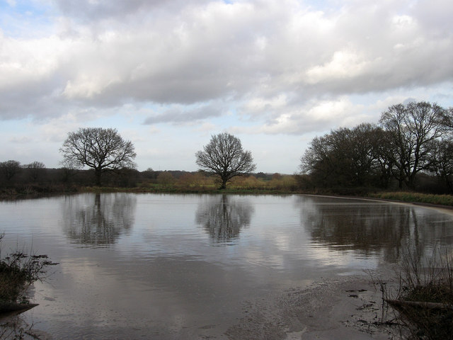Pond near Shelf Wood