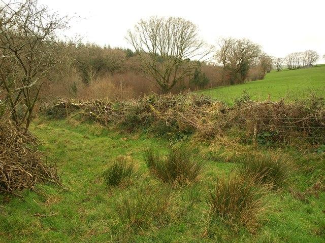 Edge of Wadland Down Plantations