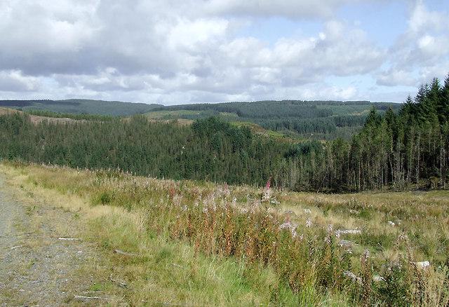 Clear fell in the Dalarwen Plantation, Ceredigion
