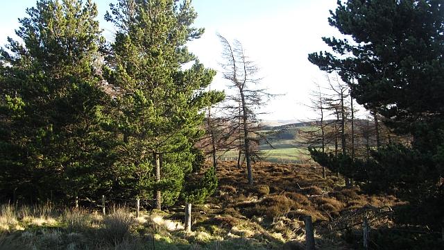 Lugate Wood