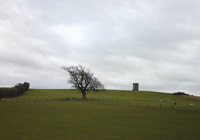 Sheep pastures north of Milnthorpe