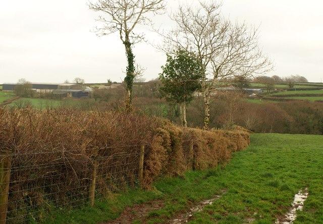 Field boundary, Scobchester