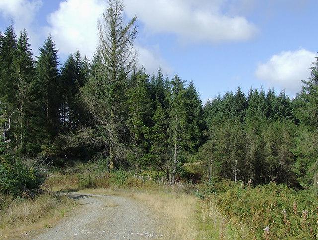 Forestry road in the Dalarwen Plantation, Ceredigion