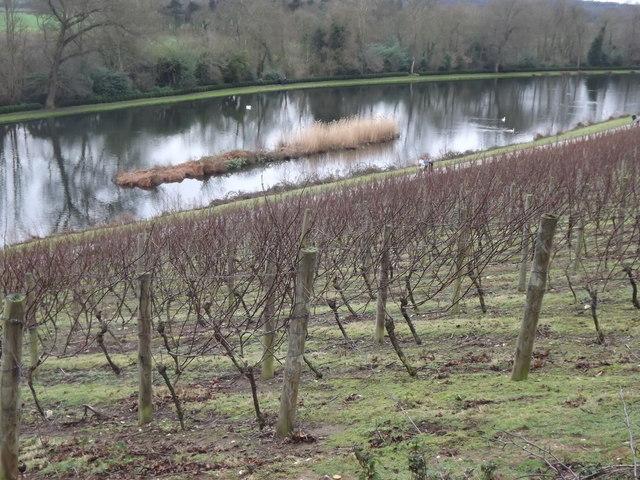 Painshill Vineyard