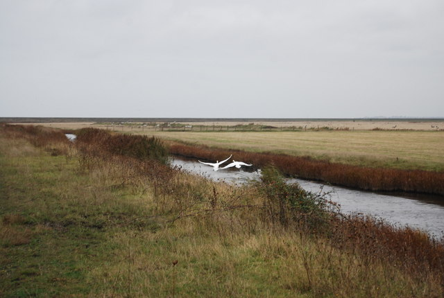Swans, Cooling Marshes