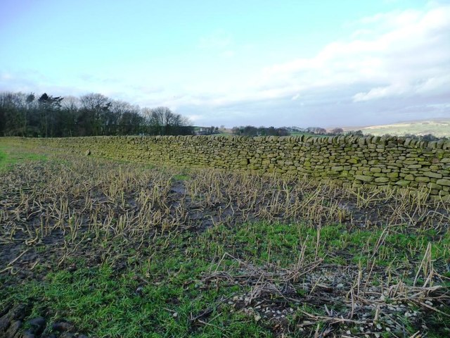 Dry stone wall and stubble, west of Redcar Lane