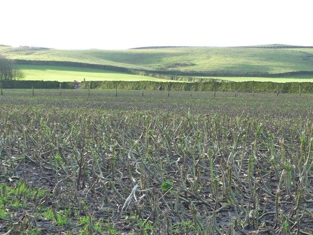Steeton Moor