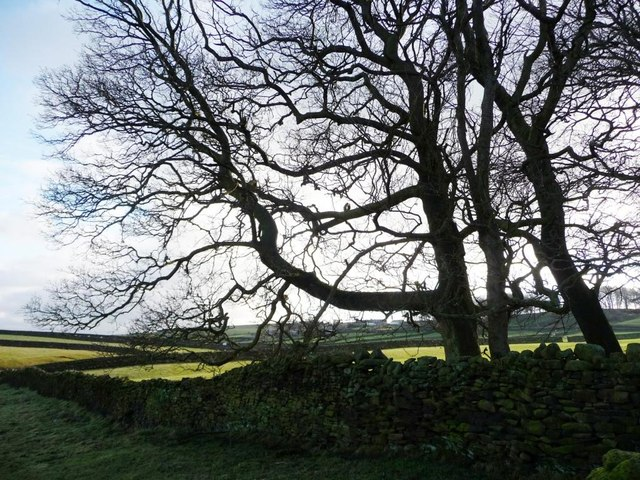 Winter trees, Steeton Moor