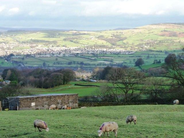 Sheep grazing near Nutt Head Farm