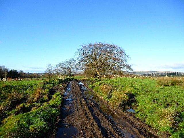 Castlecary Muir, Rashbush (ruin) [2]