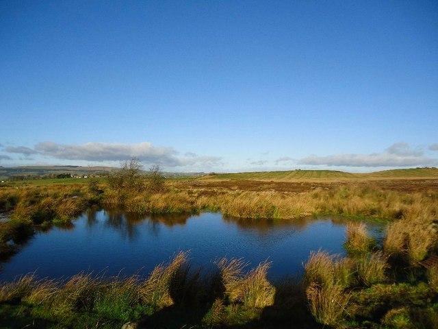 Castlecary Muir [5]