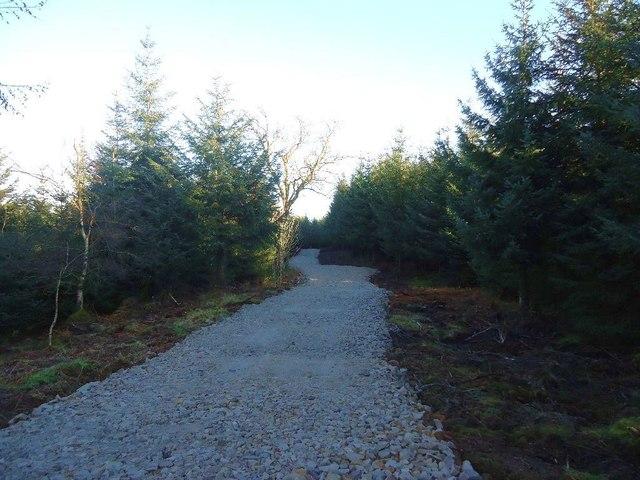 Castlecary High Wood