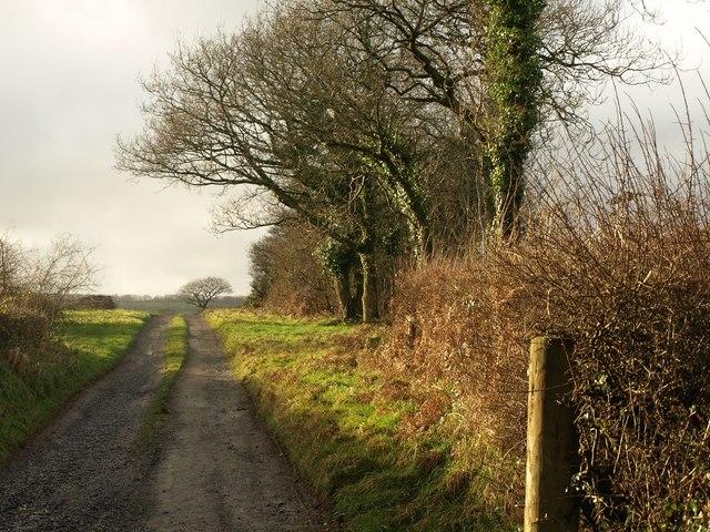 Farm track to Venn Barton