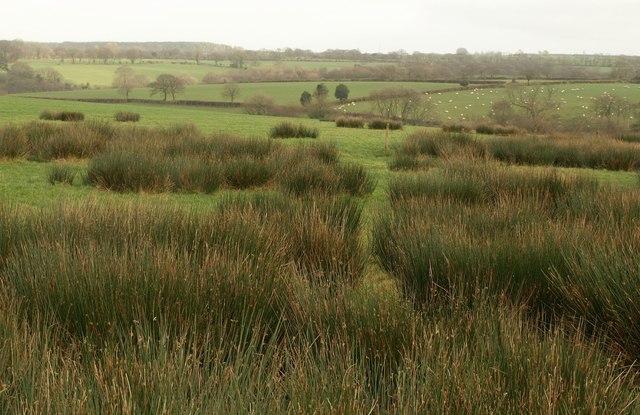 Rushy pasture, Venn Down