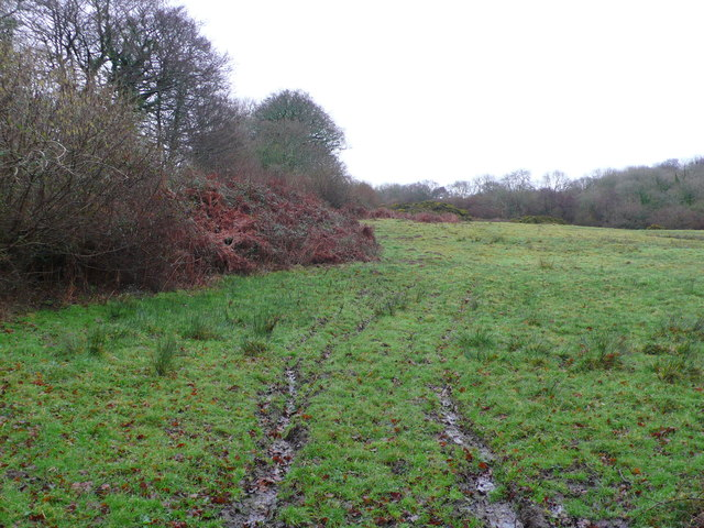 Boggy Pasture on Hungry Hill