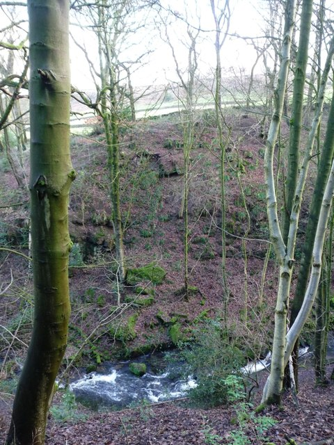 Steeton Beck at Whitley Head
