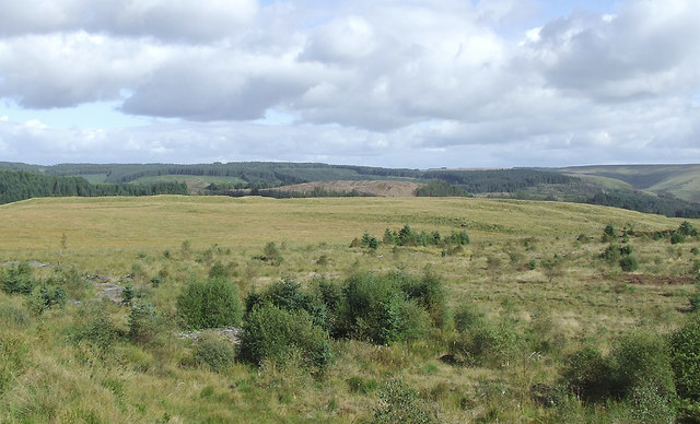 Moorland and forest south-east of Soar-y-Mynydd, Ceredigion