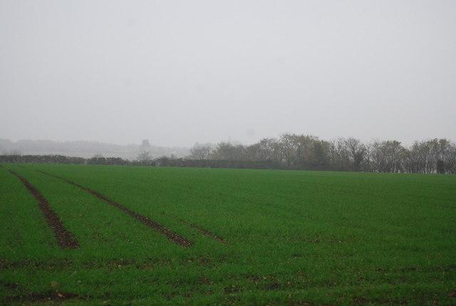 Farmland, Buckwell Farm