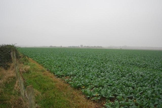 Root crop, Buckwell Farm