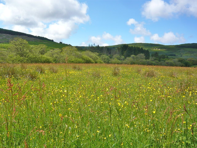 Wildflower meadow between Auchenbreck and Brackley