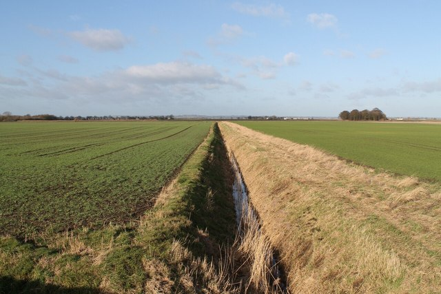 Drain and young crops, off Lade Bank