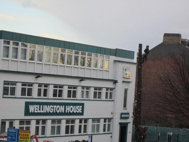 Tree felling at Wellington House, Beverley Road, Hull