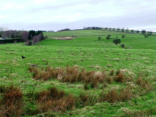 Rough grassland above Cottingley Beck