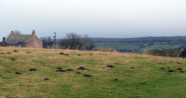 Field north-west of Cronkley