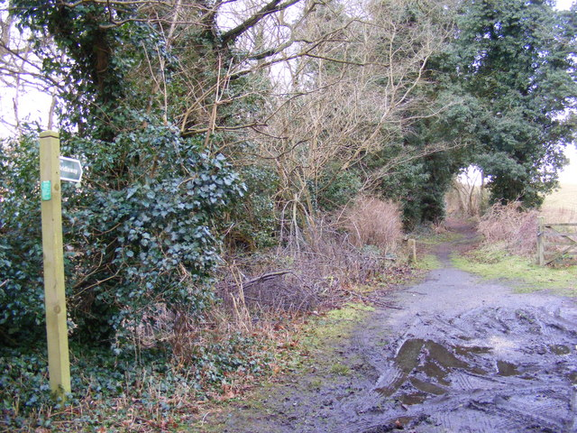 Bridleway to the A1152 Woods Lane
