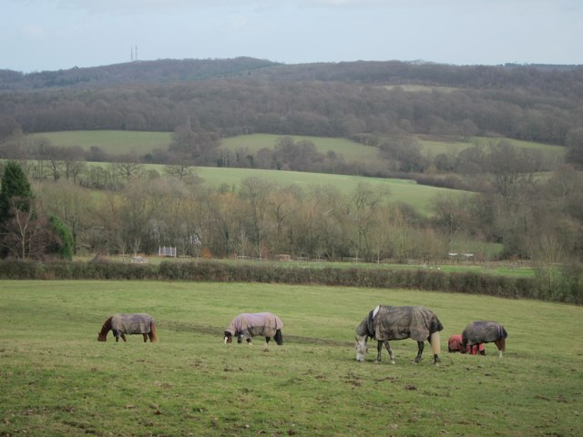 Horses at Honnington Farm
