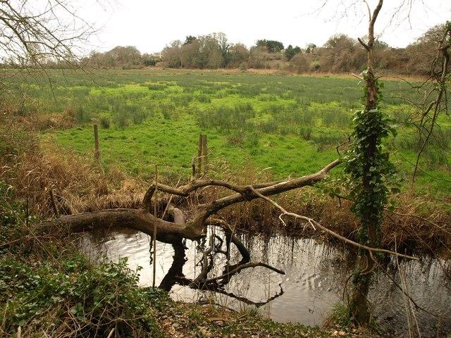 River Otter flood plain