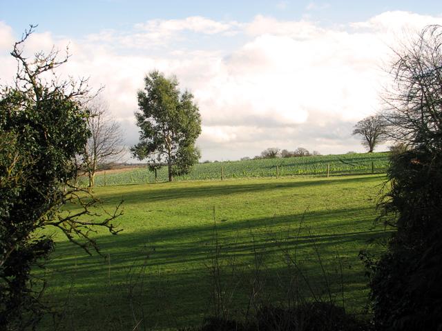 Garden beside Orchard Way, Hintlesham