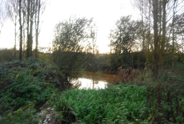 Blackwater River, Hollybush Park