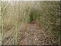 SP9752 : Footpath near the railway line at Turvey by Michael Trolove