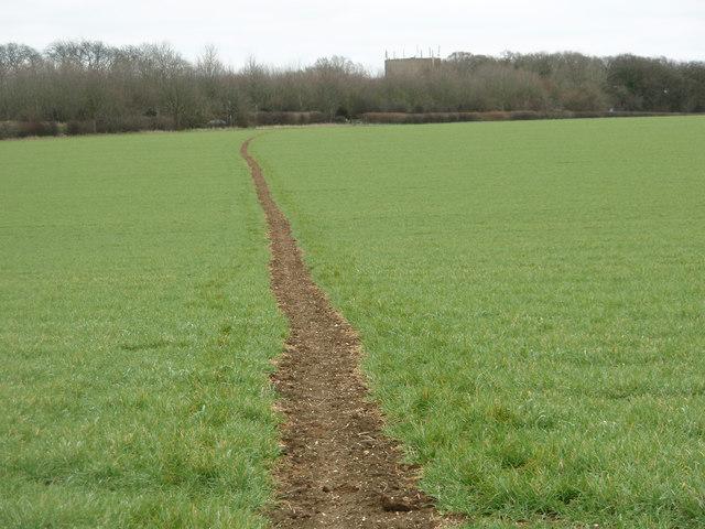Footpath through the winter barley crop