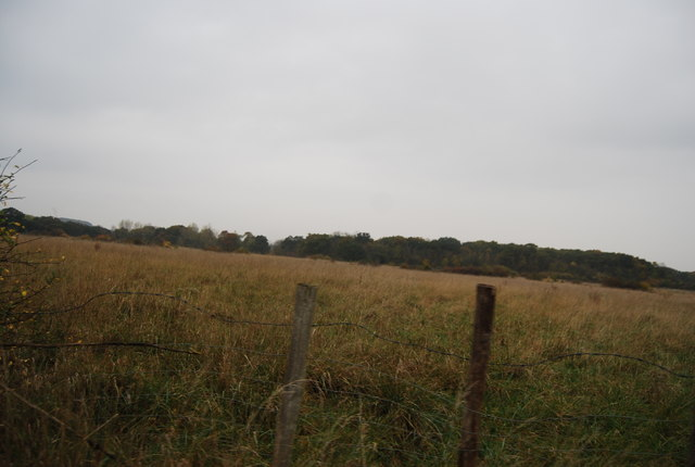 Farmland by Thornden Wood Rd