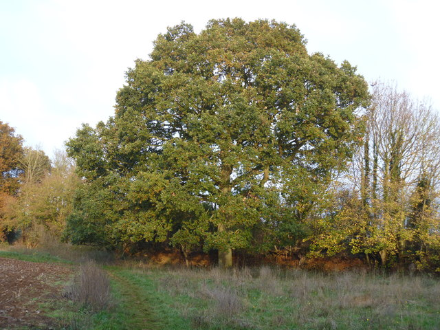 Fine tree